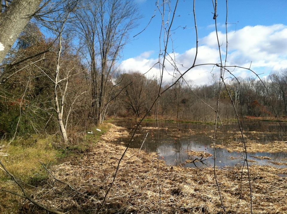 https://rivanna.org/wp-content/uploads/2015/09/Wetlands.jpg
